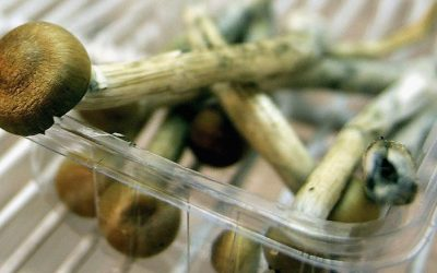 'Magic mushroom' ingredient could be used to treat depression, study says